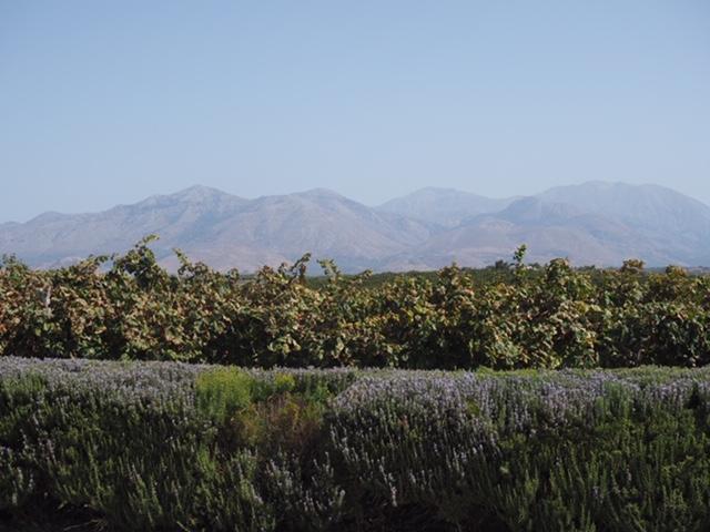 Lyrarakis winery mountain view